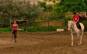 futószáras lovasoktatás